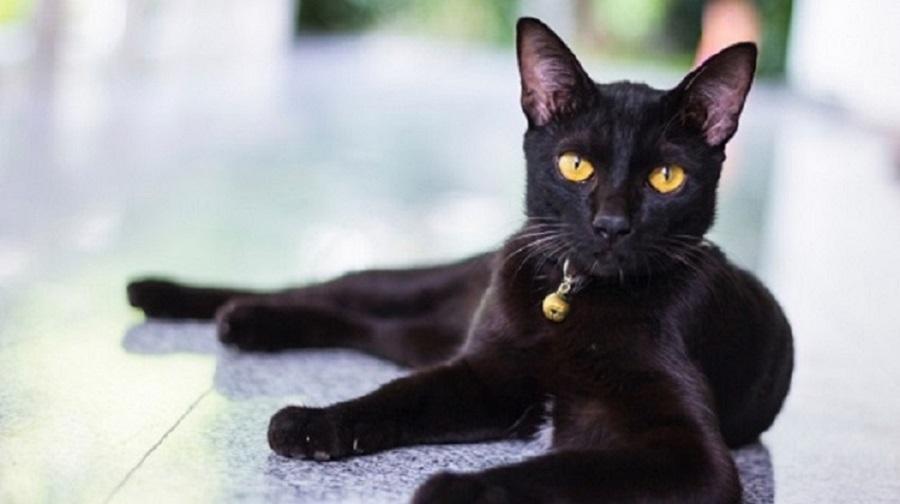 Photo of შავი კატა – ადამიანის მტერი თუ მეგობარი?