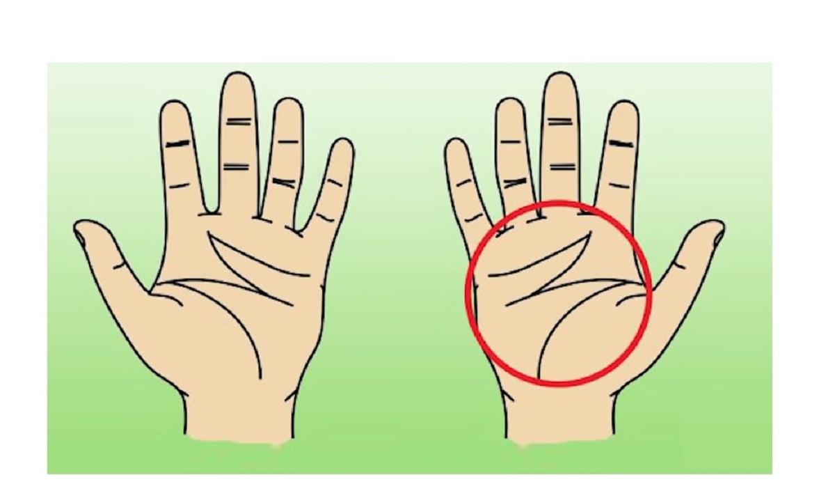 Photo of რას ნიშნავს ადამიანის ხელისგულზე ლათინური M-ის მსგავსი ხაზები