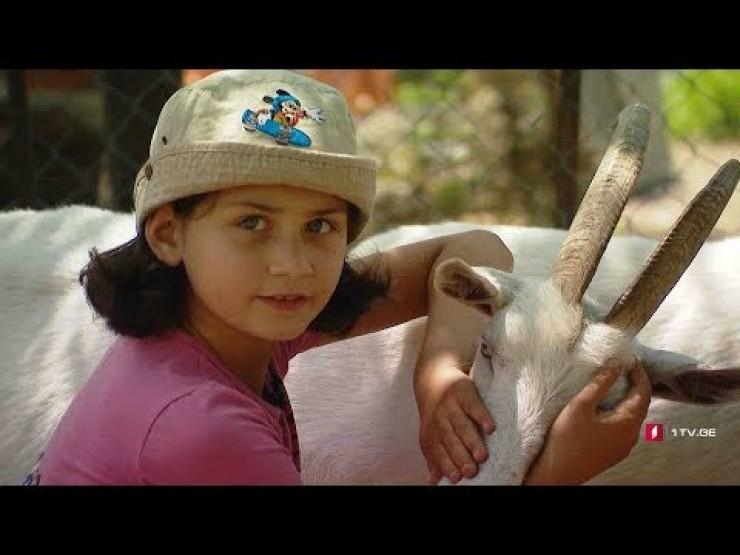 """Photo of 8 წლის """"ფერმერი"""" ნანუკა 26 თხას უვლის (ვიდეო)"""