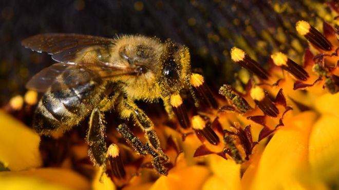 Photo of ბრაზილიაში 500 მილიონზე მეტი ფუტკარი დაიხოცა – რა არის მიზეზი?