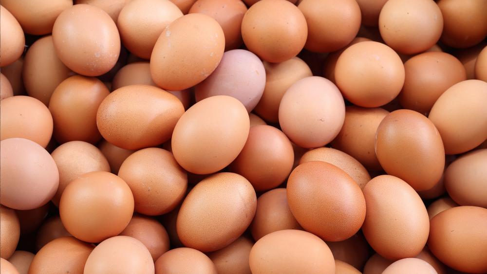 Photo of გენმოდიფიცირებულმა ქათმებმა კიბოს საწინააღმდეგო ცილის შემცველი კვერცხები დადეს