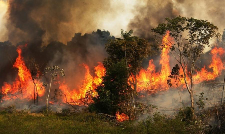 Photo of დედამიწის ფილტვები იწვის: ამაზონის ტყე ცეცხლის ალშია გახვეული (ვიდეო)