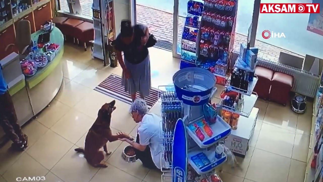 Photo of ძაღლი დაზიანებული თათით აფთიაქში შევიდა და ფარმაცევტს დახმარება სთხოვა (ვიდეო)