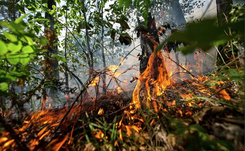 Photo of ტყის ძლიერი ხანძრის ჩასაქრობად აფხაზეთის დე ფაქტო მთავრობა დახმარებას რუსეთისგან ელის