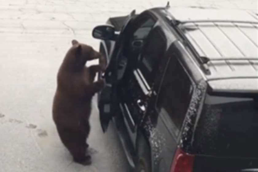 Photo of კალიფორნიაში ცნობისმოყვარე დათვმა მოქალაქის მანქანა მიისაკუთრა (ვიდეო)