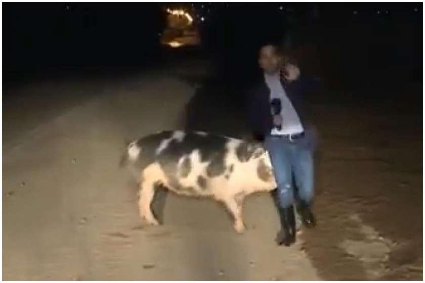 Photo of საბერძნეთში პირდაპირ ეთერში ჩართვისას ჟურნალისტს ღორმა უკბინა (ვიდეო)