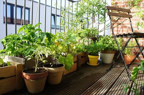 Photo of ბუნებრივი და ხელმისაწვდომი სასუქები ოთახის მცენარეებისთვის