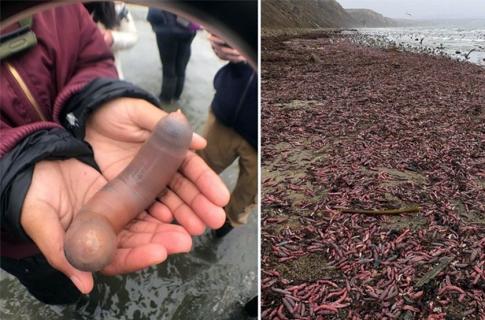 """Photo of ათასობით """"უხამსი გარეგნობის"""" ჭია კალიფორნიის პლაჟებზე"""