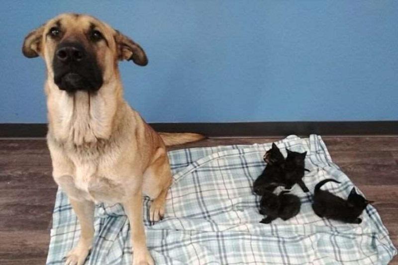 Photo of კანადაში ქუჩის ძაღლმა კნუტები გადაარჩინა