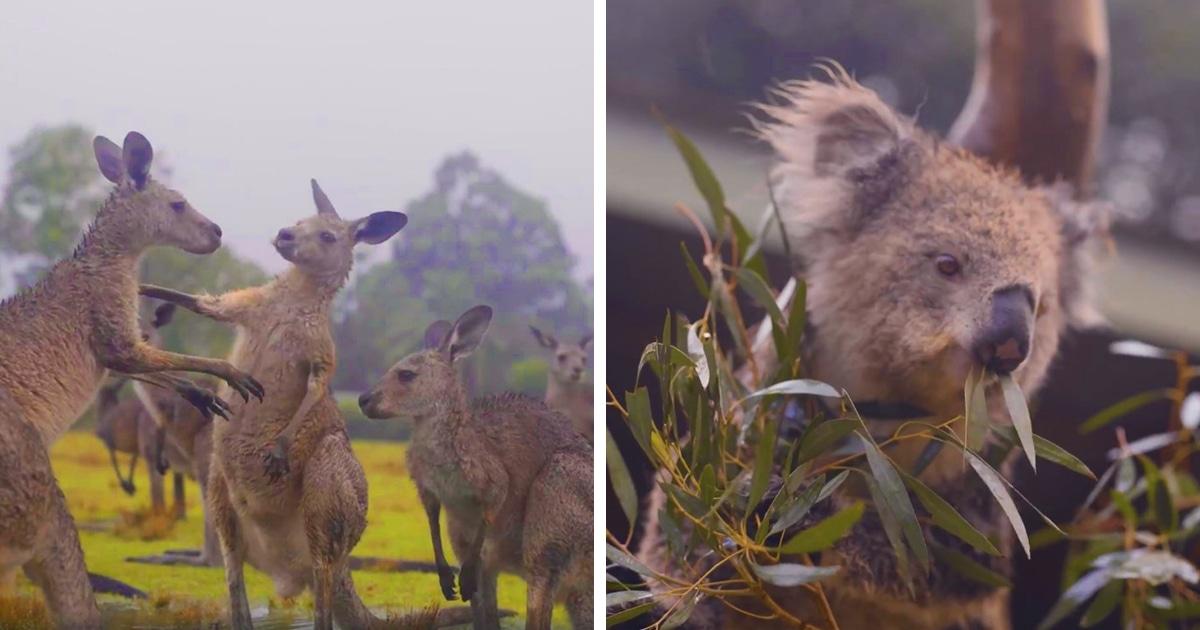 """Photo of როგორ """"ზეიმობენ"""" ცხოველები ასე ჩვეულებრივ არაჩვეულებრივ  წვიმას ავსტრალიაში (ვიდეო)"""