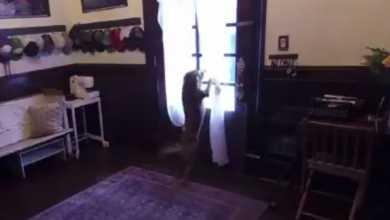 Photo of როგორ შეხვდა კოსმოსიდან სახლში დაბრუნებულ ნასას ასტრონავტს საკუთარი ძაღლი (ვიდეო)