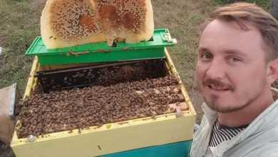 Photo of სიყვარულით მიღებული თაფლი – ბერძენი ვირტუოზი მეფუტკრის საოცარი ვიდეო