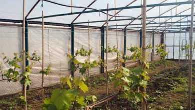 Photo of თეთრი ღვინო წითელ პლანეტაზე – მარსზეც პირველად ქართული ღვინო დაიწურება?