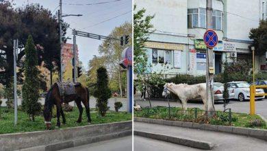 """Photo of ცხენი – ბოლო დღეების პოპულარული """"სატრანსპორტო საშუალება"""" თბილისში"""