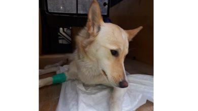 Photo of ბორჯომში მე-12 სართულიდან მაკე ძაღლი გადმოაგდეს