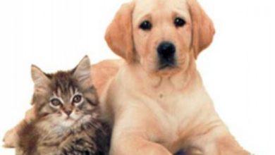 Photo of ჩინეთში წელიწადში 10 მილიონ ძაღლს და 4 მილიონ კატას ჭამენ