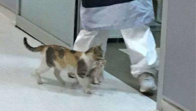 Photo of სტამბოლში კატამ საავადმყოფოში თავისი კნუტი მიიყვანა