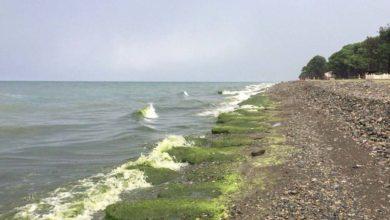 """Photo of ფოთისა და ურეკის სანაპირო მწვანედ """"შეიღება"""""""