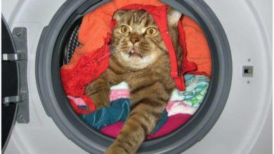 Photo of კატამ 12 წუთი ჩართულ სარეცხის მანქანაში გაატარა და გადარჩა