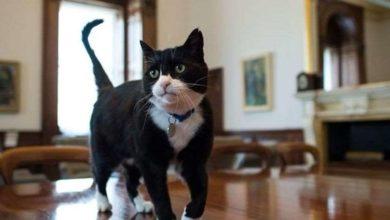 Photo of კატა პალმერსტონმა ბრიტანეთის საგარეო საქმეთა სამინისტროს თაგვებზე მონადირის თანამდებობა დატოვა🐈