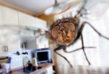 Photo of საფრანგეთში კაცი ბუზის მოკვლას ცდილობდა და საკუთარი სახლის ნაწილი ააფეთქა