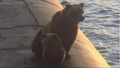 Photo of წყალქვეშა ნავზე ამძვრალი დათვები რუსმა სამხედროებმა მოკლეს (ვიდეო)