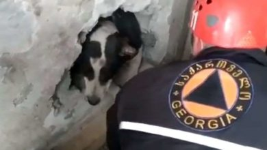 Photo of ბათუმში შენობებს შორის გაჭედილი ძაღლი მაშველებმა უვნებლად გამოიყვანეს (ვიდეო)