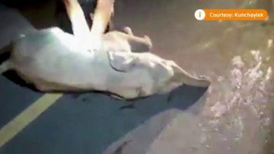 Photo of ავტოავარიაში მოყოლილი სპლიყვი მაშველმა სიკვდილს გადაარჩინა (ვიდეო)