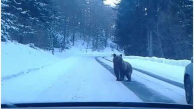 Photo of რაჭის გზაზე დათვი სეირნობს (ვიდეო)
