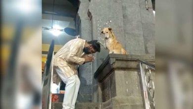 Photo of ინდოეთში ძაღლი ტაძართან ზის და მრევლს ლოცავს (ვიდეო)