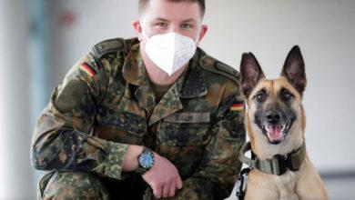 Photo of გერმანული გაწვრთნილი ძაღლები კორონავირუსს 94%-იანი სიზუსტით ცნობენ