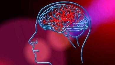 Photo of თავის ტვინი და ადამიანის გონებრივი შესაძლებლობები
