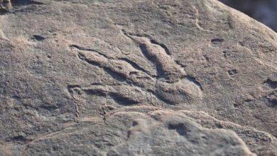 Photo of ოთხი წლის გოგონამ 220 მლნ წლის წინანდელი დინოზავრის ნაფეხური აღმოაჩინა