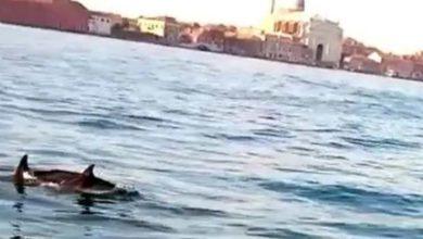 Photo of ვენეციაში, სან მარკოს მოედანთან ახლოს დელფინები გამოჩნდნენ🐬(ვიდეო)