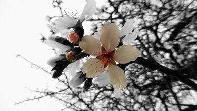 Photo of ზოდიაქოს ხუთი რჩეული ნიშანი – ვის გაუმართლებს ამ გაზაფხულზე