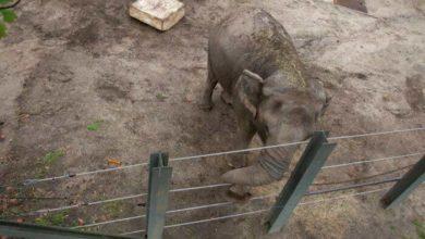 Photo of სპილოს სარჩელს ნიუ-იორკის სასამართლო განიხილავს (ვიდეო)
