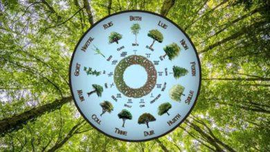 Photo of რომელი ხე ხართ დრუიდების უძველესი ჰოროსკოპით?
