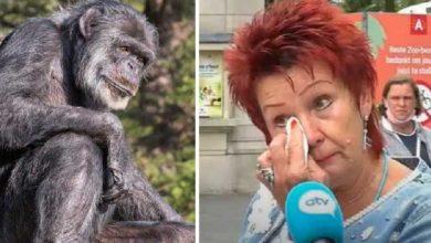 Photo of ბელგიაში ქალი შიმპანზესთან რომანის გამო ზოოპარკიდან გააძევეს (ვიდეო)